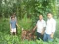 Curi Sawit,Tomi Ditangkap Pemilik Kebun